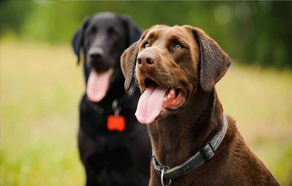 When Your Dog's Panting Might Mean Trouble