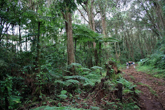 Photo: First: rainforest!