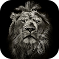 Lion King CM Locker Cool Theme icon