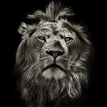 Lion King CM Locker Cool Theme Icon