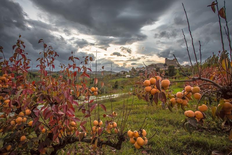 Autunno in campagna di Marcello Zavalloni