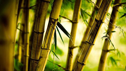 Bamboo Live Wallpaper