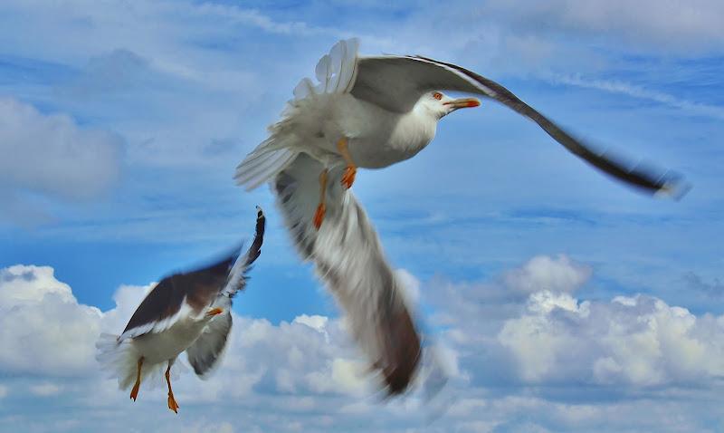 Stop and fly di tonino_de_rubeis