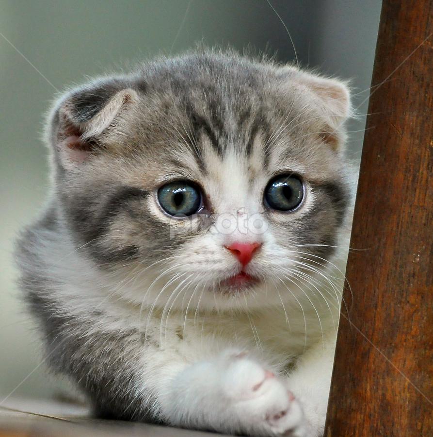 Folded girl by Cacang Effendi - Animals - Cats Playing ( cats, kitten, cattery, chandra, animal, pwc84 )
