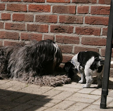 Photo: Wilma und Ellie in der Sonne
