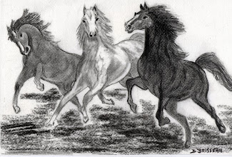 Photo: 3 chevaux sauvages
