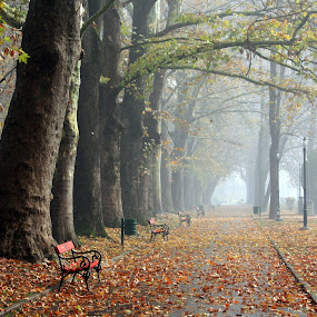 Autumn in empty park by Emil Chuchkov - City,  Street & Park  City Parks ( fall leaves on ground, skopje macedonia, cuckove canon autumn fall park )