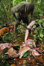Photo: butchery in the forest