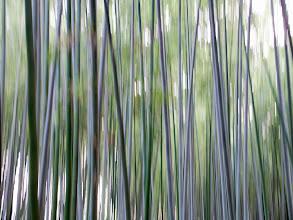 Photo: Arashiyama bamboo forest