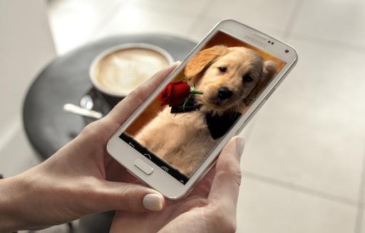강아지 라이브 배경 화면