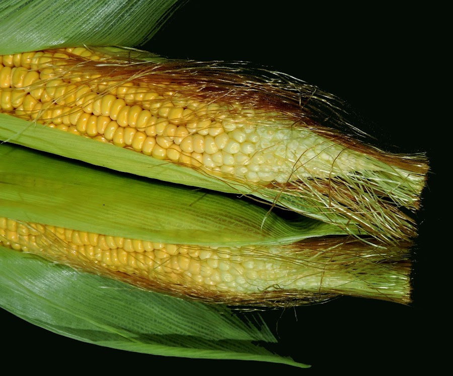 CORNS by SANGEETA MENA  - Food & Drink Fruits & Vegetables