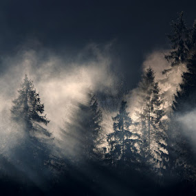 jutro by Donat Piber - Landscapes Forests ( forest, morning, sun )