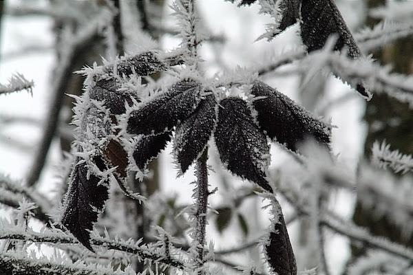 Spine di ghiaccio di acquario
