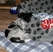 Photo: Ellie hat sich schon ein gemütliches Plätzchen gesucht - Hauptsache der Kopf liegt erhöht