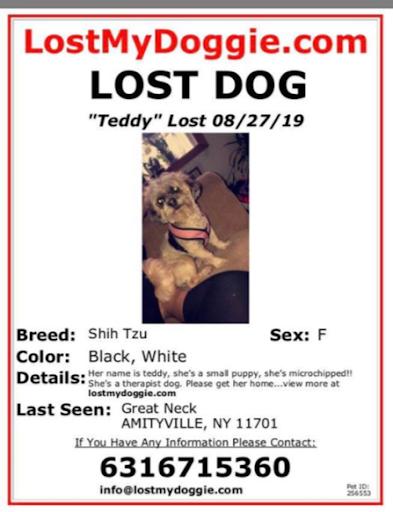 Teddy, MISSING Aug 28, 2019