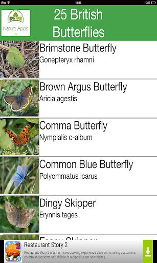 25 British Butterflies