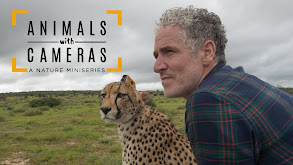 Animals With Cameras, A Nature Miniseries thumbnail
