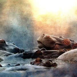 Hippo Heaven by Bjørn Borge-Lunde - Digital Art Animals ( fantasy, wild animal, wilderness, animals, hippo, nature, wildlife, africa )