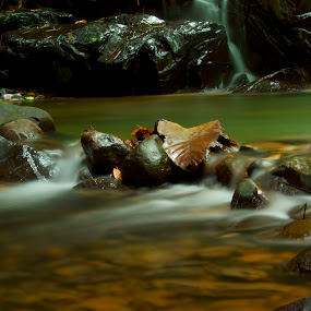 Almost Drift away... by Fredzex Foo - Nature Up Close Rock & Stone ( water, dried, green, falls, brown, leaf, flow, stones, rivers, leaves, rocks )