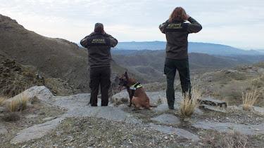 Agentes de Medio Ambiente vigilan la sierra.