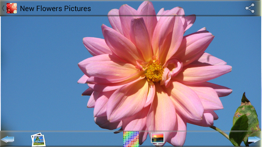android New Flowers Pictures Screenshot 1