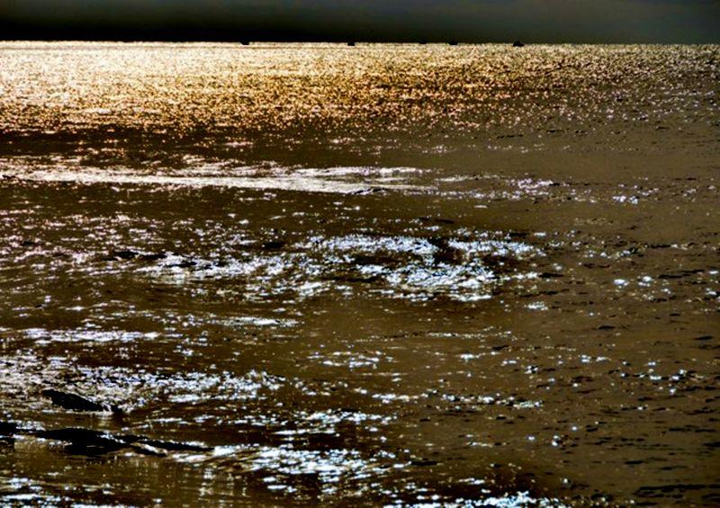 Un mare.......d'oro di Domidi
