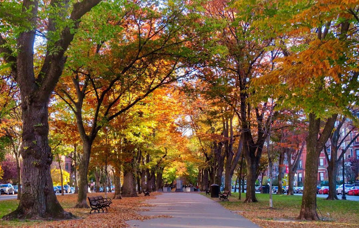 Commonwealth Ave in the early fall as the leaves begin to turn. Photo: borntotravel2.