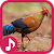 Jungle fowl Sounds file APK Free for PC, smart TV Download
