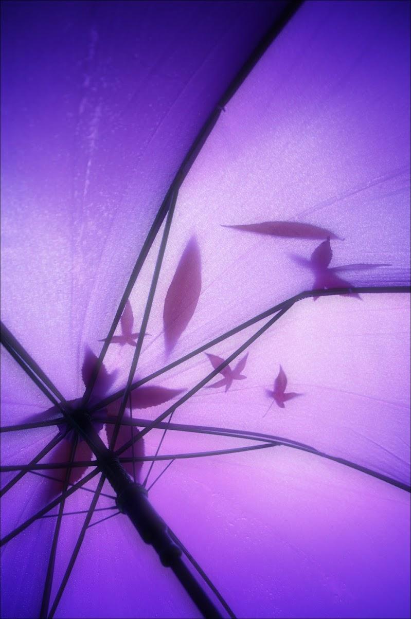 pioggia di foglie di cristinababuder