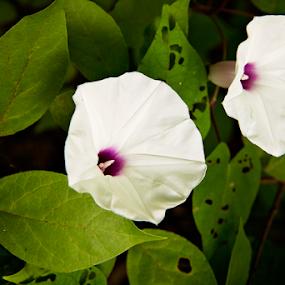 by Brook Kornegay - Flowers Flowers in the Wild