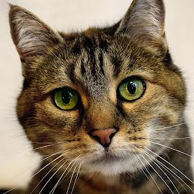 Meow-Meow Curious.JPG
