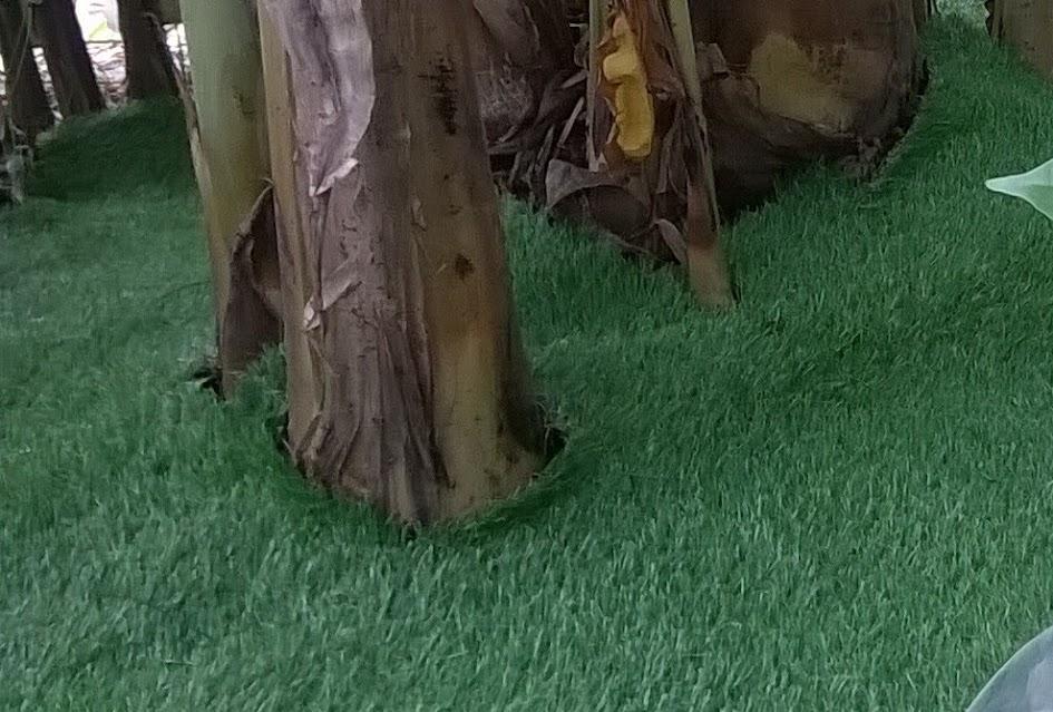cỏ nhân tạo treo tường và thảm sân vườn lót lối đi tuyệt đẹp 2018