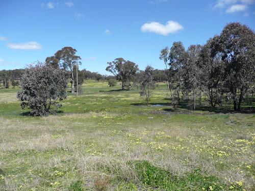 700 Acres Property near Manildra NSW
