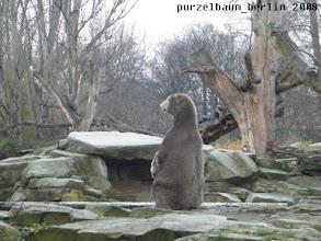 Photo: Ist spannend dort drueben - Knut setzt sich bequem hin...