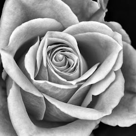 by Marco Bertamé - Black & White Flowers & Plants