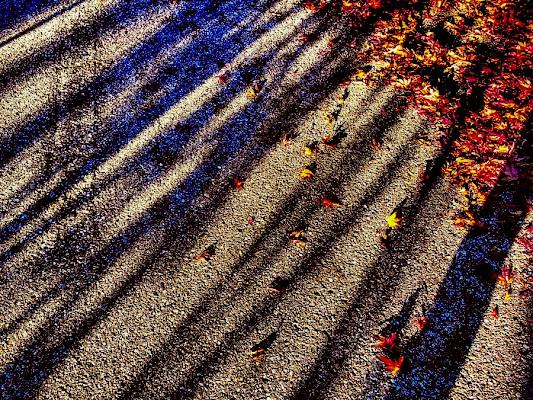 Shadows and leaves di MarcoGiacomin