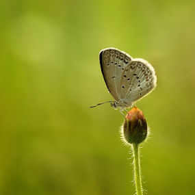 Sun Bathing by Anton Wahyudi - Animals Insects & Spiders