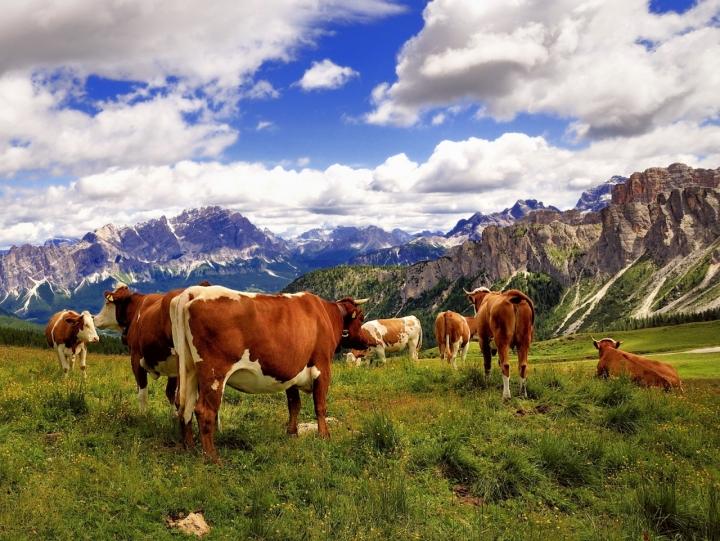 Aroma di montagna..... di www.fioregiallophoto.it