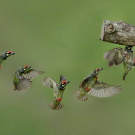 by Ken Goh - Animals Birds