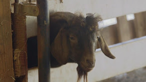 Virginia Cattle Call thumbnail