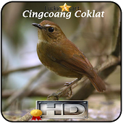 App Cingcoang Coklat Top APK for Windows Phone