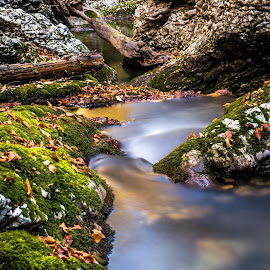 Magical stream by Vedran Vugrinec - Nature Up Close Water ( water, stream, moss, stone, forest,  )