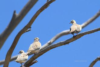 Photo: Doves