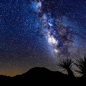 Fireworks by Sean Cogan - Landscapes Deserts ( stars, joshua tree, astrophotography, galaxy, milky way )