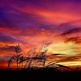Sunrise in the desert  by Loredana  Smith - Landscapes Travel ( calm, seasonal, freedom, range, colorful, beauty, remote, landscape, photography, panorama, sky, nature, idyllic, dramatic, perfect, peaceful, colors, majestic, scenics, beautiful, romantic, horizon, dusk, nature outdoors, rural, season, peace, sky sunset, scene, cloud, scenery, panoramic )