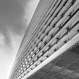 city garden 2 by Jadran Korać - Black & White Abstract