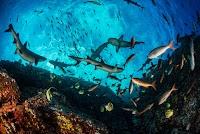 Vue sous-marine d'un écosystème diversifié de poissons et autres espèces aquatiques