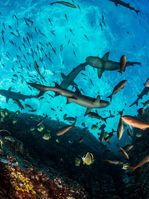 A diverse ecosystem of fish and other aquatic wildlife viewed underwater from below