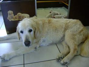 Photo: gigi, bijna 17 jaar, voor de pups