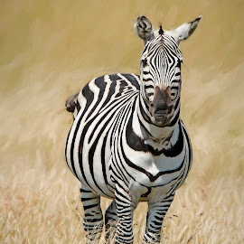 Zebra in the wild by Pravine Chester - Digital Art Animals ( nature, digital art, wildlife, zebra, digital painting, animal,  )